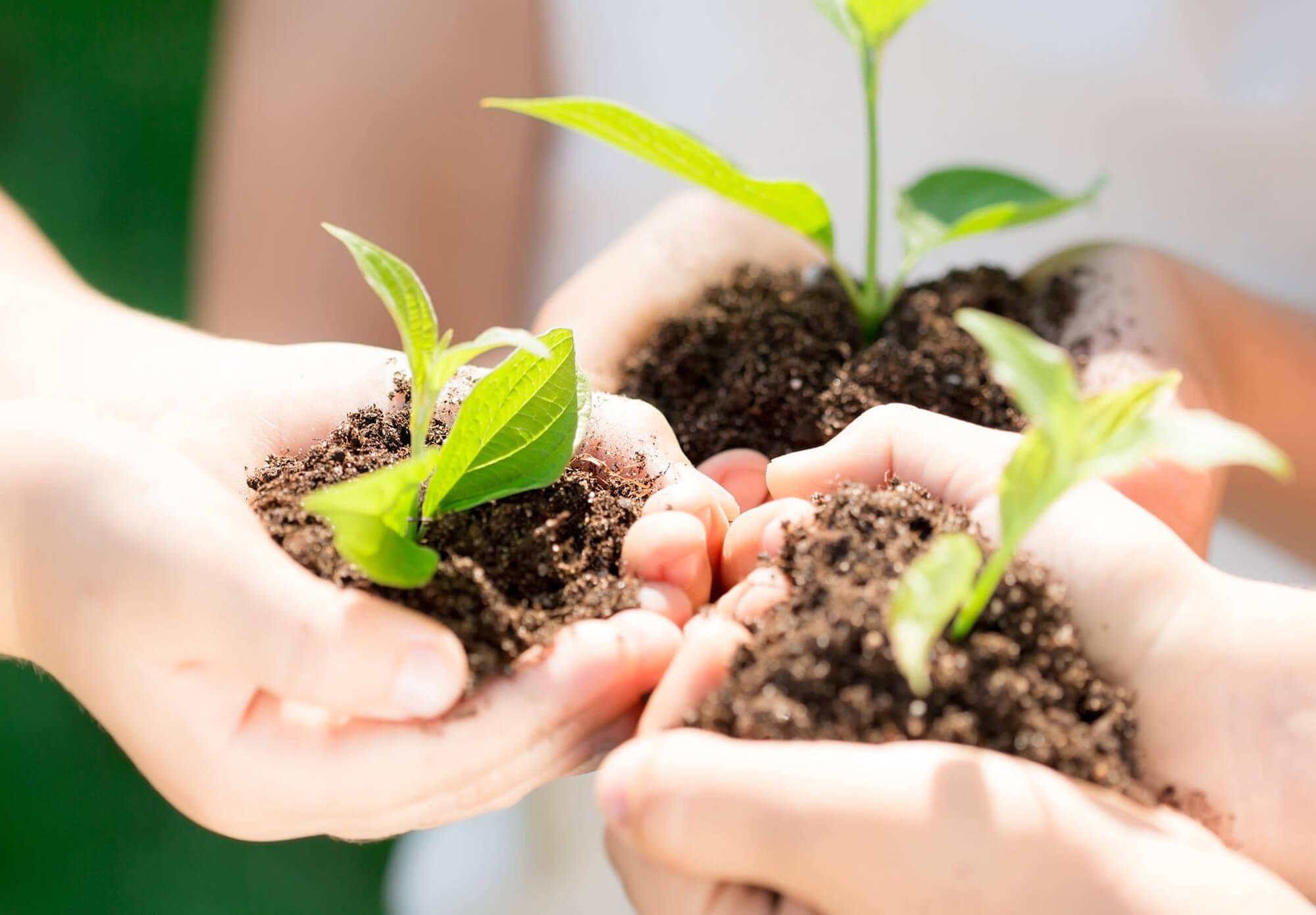 trenner-nachhaltigkeit-haende-saetzlinge-zukunft