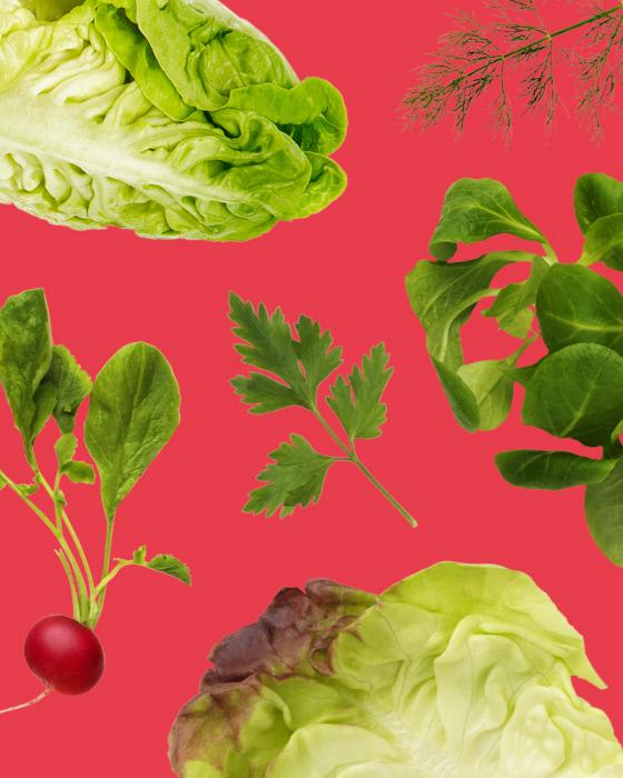 june_2019_legumiz_15_vegetable_not_to_associate_in_the_garden_web_05