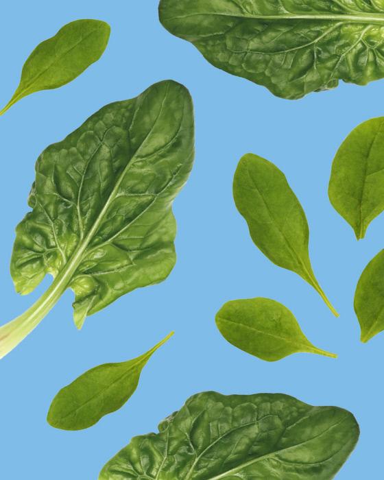 june_2019_legumiz_15_vegetable_not_to_associate_in_the_garden_web_10