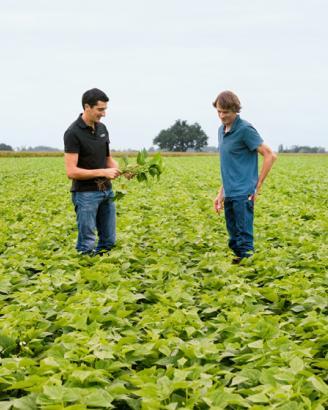 Agroécologie chez Bonduelle Cap sur l'agriculture augmentée